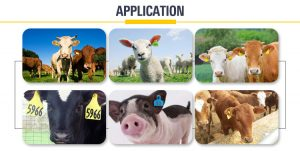 rfid livestock management